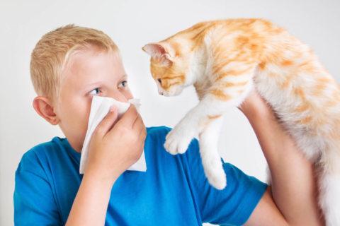 Alergie Oddechowe